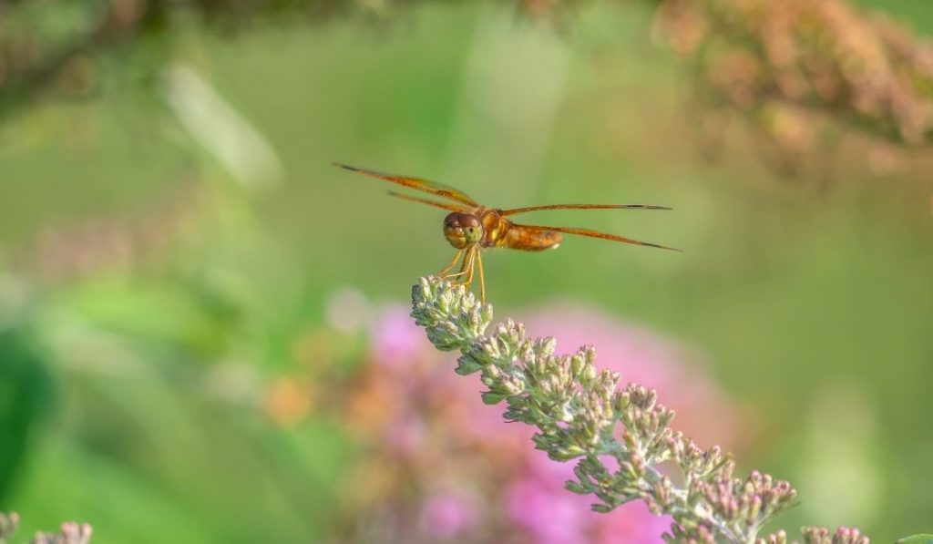 Dragonfly on top flower in the garden