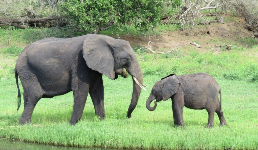 Mother and baby elephant near water