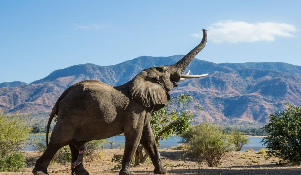 Elephant and Mountain in the background