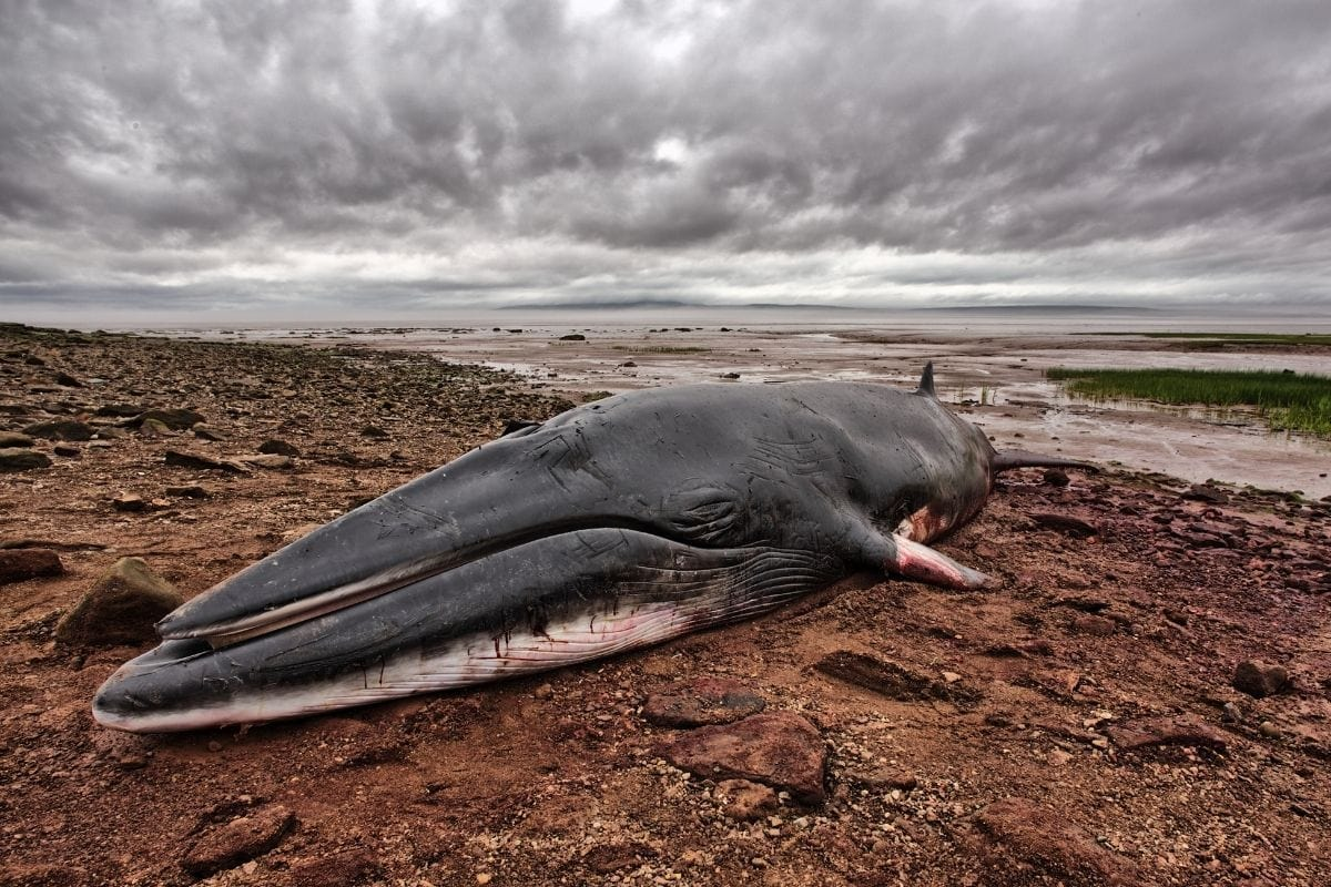dead whale on the shore