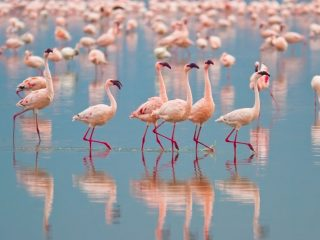 group of flamingos on the water