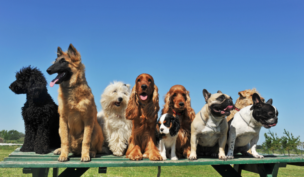 Group of dogs on the table