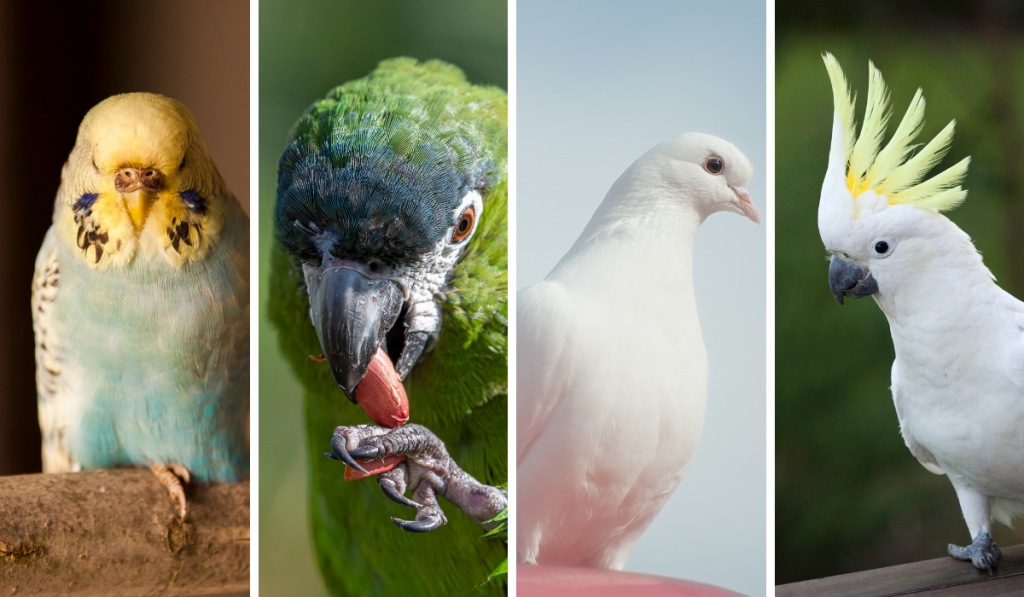 A grid pictures of birds standing.