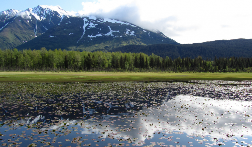 A beautiful view of greenly forest at Kenai Fjords National Park