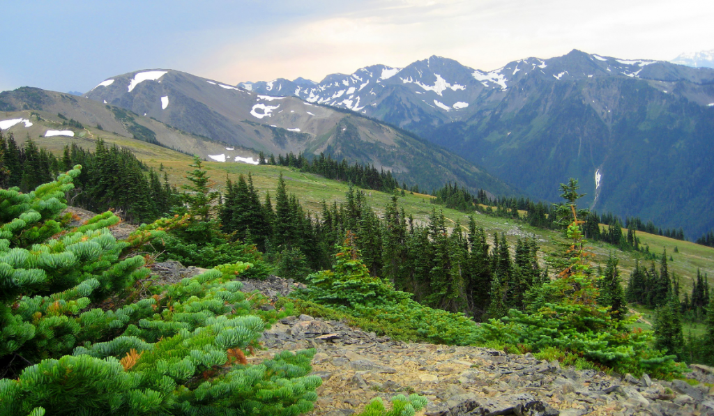 A cool and green scenery with the view of Olympic Mountains.