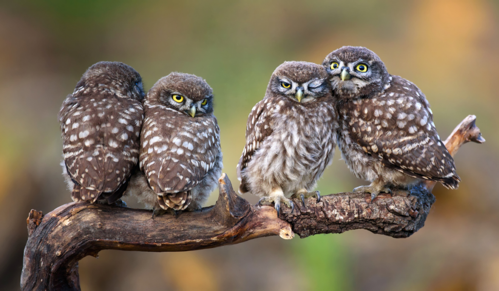 Owl sitting on the branch by pair.