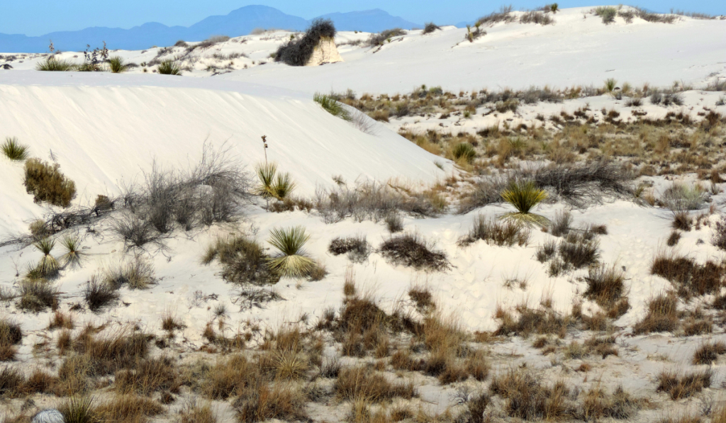 White Sand with dry bush.