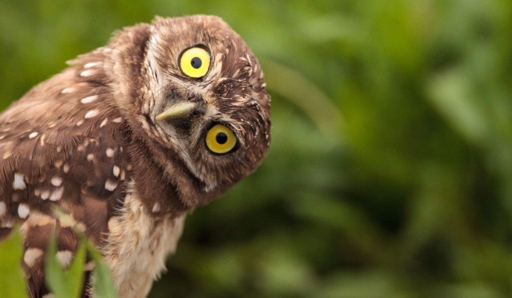 funny owl tilts his head to the right