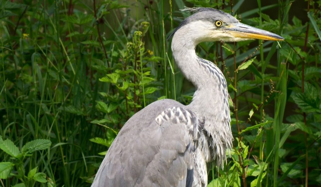 heron in the forest