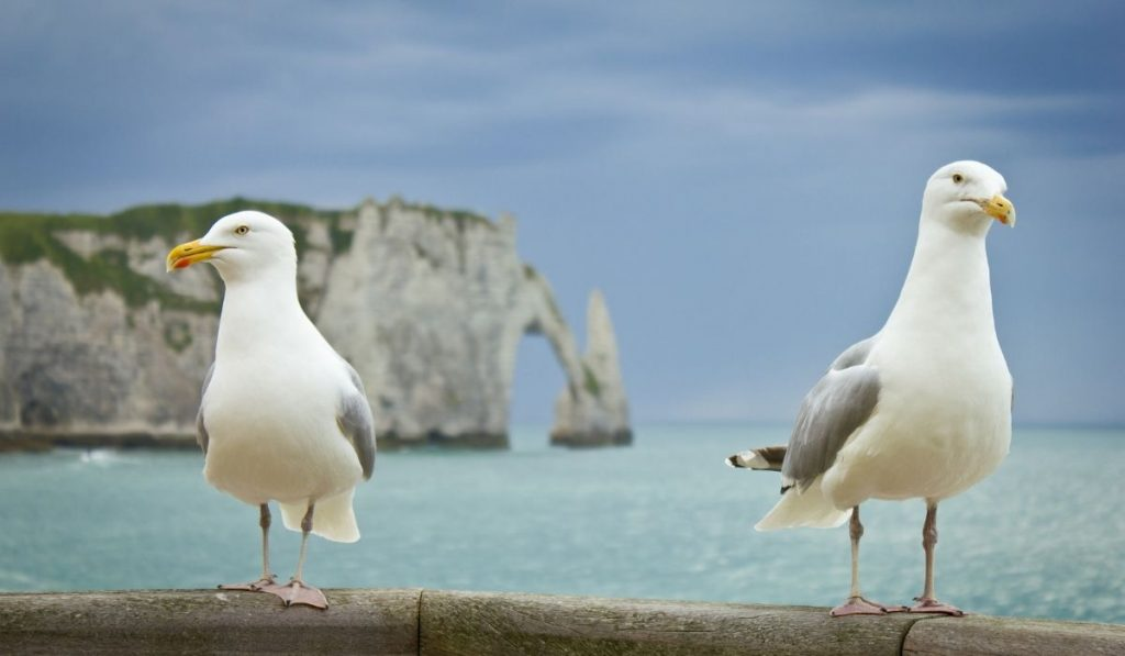 two seagulls standing on the edge of the wall
