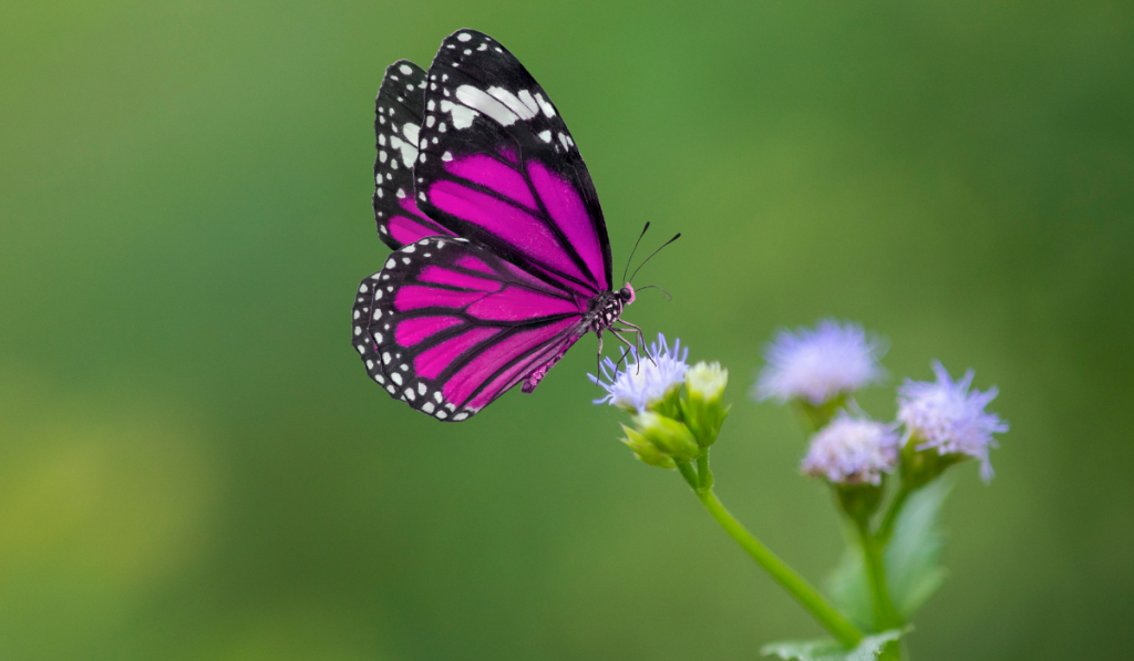 A violet butterfly landed on a flower.