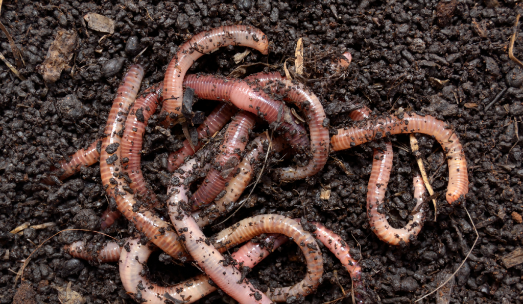 Earthworms on the ground almost covered with soil
