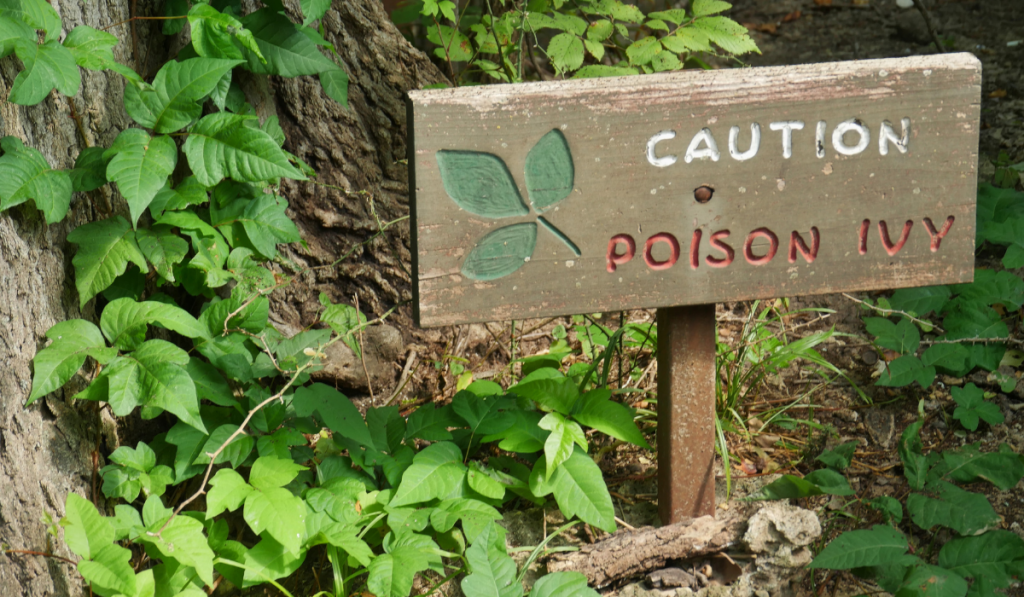 Poison Ivy sign and its plants in the surrounding.