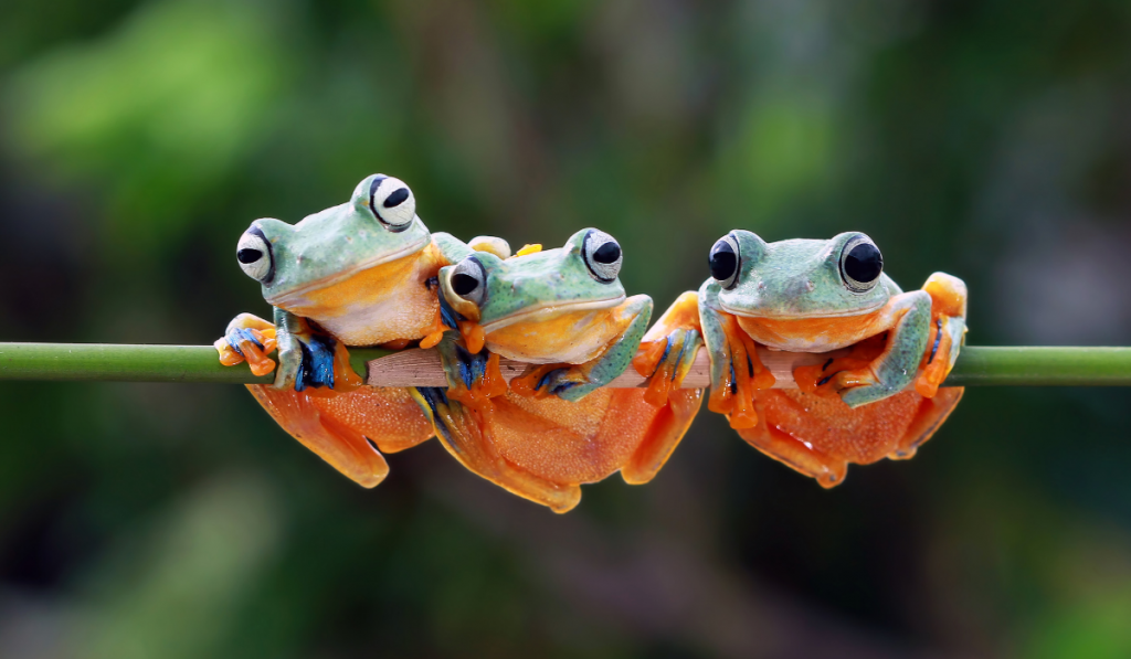 Three cute frogs hanging on the stem