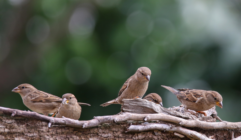 Sparrows standing on a tree branch
