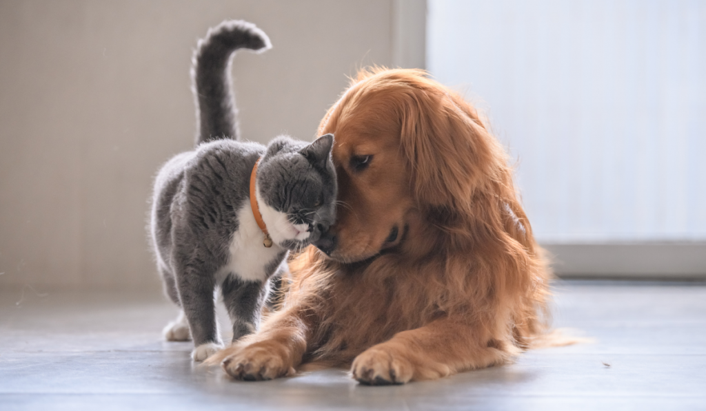 Dog and cat rubbing its head